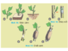 Bài 11. Sản xuất và bảo quản cây trồng- Công nghệ 7: Thế nào là giâm cành, chiết cành, ghép mắt (hoặc cành )?