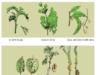 Bài 12. Sâu, bệnh hại cây trồng – Công nghệ 7: Thế nào là biến thái của côn trùng ?