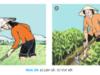 Bài 19. Các biện pháp cây trồng – Công nghệ 7: Hãy cho biết Ưu ,nhược điểm của các phương pháp tưới nước cho cây ?