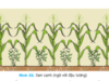 Bài 21. Luân canh, xen canh, tăng vụ- Công nghệ 7: Nêu tác dụng của việc luân canh ,xem canh ,tăng vụ trong sản xuất trồng trọt ?