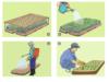Bài 24. Gieo hạt và chăm sóc vườn gieo ươm cây rừng – Công nghệ 7:Hãy nêu thời vụ và quy trình gieo hạt cây rừng ở nước ta ?
