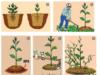 Bài 27. Chăm sóc rừng sau khi trồng – Công nghệ 7:Chăm sóc rừng sau khi trồng gồm những công việc gì ?