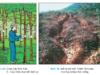 Bài 28. Khai thác rừng – Công nghệ 7:Khai thác rừng hiện nay ở Việt Nam phải tuân theo các điều kiện nào ?