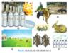 Bài 30. Vai trò và nhiệm vụ phát triển chăn nuôi – Công nghệ lớp 7: Nhiệm vụ phát triển của chăn nuôi phát triển của nước ta trong thời gian mới? ?