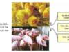Bài 45. Nuôi dưỡng và chăm sóc các loại vật nuôi – Công nghệ 7: Em cho biết mục đích và biện pháp của chăn nuôi đực giống ?