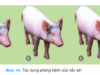 Bài 47. Vắc-xin phòng bệnh cho vật nuôi – Công nghệ 7: Em cho biết tác dụng của vắc xin đối với cơ thể vật nuôi?