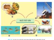 Bài 49. Vai trò, nhiệm vụ của nuôi thủy sản – Công nghệ 7: Nhiệm vụ chính của nuôi thuỷ sản là gì?