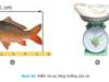 Bài 54. Chăm sóc, quản lý và phòng trị bệnh cho động vật thủy sản (tôm, cá)- Công nghệ 7: Những công việc của quản lý ao là gì?