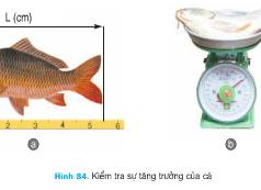 Bài 54. Chăm sóc, quản lý và phòng trị bệnh cho động vật thủy sản (tôm, cá) – Công nghệ 7: Những công việc của quản lý ao là gì?