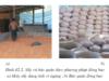 Bài 42. Bảo quản lương thực, thực phẩm_ CÔng nghệ 10: Trình bày quy trình bảo quản khoai lang, sắn.