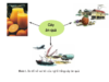 Bài 1. Giới thiệu nghề trồng cây ăn quả – Công nghệ 9: Em hãy nêu một vài điển hình tốt về trồng cây ăn quả ở địa phương em ?