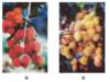 Bài 11. Kỹ thuật trồng cây chôm chôm – Công nghệ lớp 9: Hãy nêu các yêu cầu ngoại cảnh của cây chôm chôm và các giống chôm chôm trồng ở địa phương ?