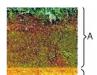 Bài 26. Đất. Các nhân tố hình thành đất – Địa lí lớp 6: Hãy cho .biết nguồn gốc của thành phần khoáng trong đất.