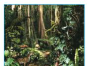 Bài 27. Lớp vỏ sinh vật. Các nhân tố ảnh hưởng đến sự phân bố thực, động vật trên Trái Đất Địa lí 6: Hãy quan sát các hình 67, 68 SGK