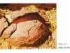 Bài 9. Tác động của ngoại lực đến địa hình bề mặt Trái Đất – Địa lớp 10:Vì sao quá trình phong hoá lại xảy ra mạnh nhất ở bề mặt Trái đất?