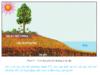 Bài 17. Thổ nhưỡng quyển. Các nhân tố hình thành thổ nhưỡng – Địa lí 10: Câu hỏi lý thuyết 2 – SGK