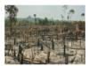Bài 12. Chính sách tài nguyên và bảo vệ môi trường – GDCD 11: Trách nhiệm của em đối với việc bảo vệ tài nguyên, môi trường như thế nào?