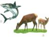 Bài 63. Động vật ăn gì để sống – Khoa học 4: Kể tên một số động vật ăn tạp