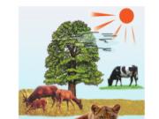 Bài 64. Trao đổi chất ở động vật – Khoa học 4: Nêu những dấu hiệu bên ngoài của sự trao đổi chất giữa động vật và môi trường