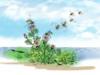 Soạn bài Tập đọc: Hành trình của bầy ong – Bầy ong đến tìm mật rong ruổi trăm miền: