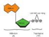 Bài 1, 2, 3 trang 73 Sách Sinh lớp 10 Nâng cao – Chọn phương án đúng. ATP là một phân tử quan trọng trong trao đổi chất vì: