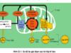 Bài 1, 2, 3 trang 80 SGK Sinh học 10 Nâng cao – Phân biệt đường phân với chu trình Crep về : vị trí xảy ra, nguyên liệu, sản phẩm tạo ra và năng lượng.