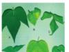 Bài 1, 2, 3, 4, 5 trang 27 Sinh lớp 11 Nâng cao – Vì sao khi trồng cây người ta phải thường xuyên xới đất ở gốc cây cho tơi xốp?