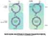 Bài 1, 2, 3, 4, 5, 6 trang 39 SGK Sinh học 11 Nâng cao – Phân tích sự giống nhau và khác nhau giữa các chu trình cố định C02 của ba nhóm thực vật.