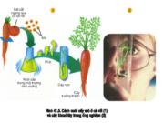 Bài 1, 2, 3, 4, 5 trang 159 Sinh học 11 Nâng cao – Trình bày cơ sở khoa học và phương pháp của các hình thức nhân giống (giâm, chiết, ghép, nuôi cấy mô).