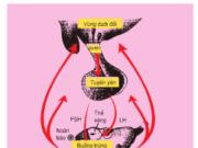 Bài 1, 2, 3, 4, 5 trang 181 SGK Sinh 11 Nâng cao – Vì sao cơ chế điều hòa sinh tinh và điều hòa sinh trứng đều được thực hiện theo cơ chế ngược.
