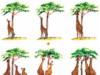 Bài 1, 2, 3, 4, 5, 6 trang 143, 144 Sinh lớp 12 Nâng cao – Nguồn gốc thống nhất của sinh giới được thể hiện ở những bằng chứng sinh học phân tử nào?