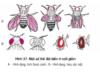 Bài 1, 2, 3, 4, 5 trang 157 Sinh lớp 12 Nâng cao – Vì sao nói chọn lọc tự nhiên là nhân tố chính của quá trình tiến hoá?