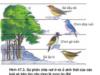 Bài 1, 2, 3, 4 trang 198 Sách môn Sinh 12 Nâng cao – Thế nào là giới hạn sinh thái ? Khoảng thuận lợi và các khoảng chống chịu của một nhân tố sinh thái là gì?