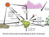 Bài 1, 2, 3, 4, 5 trang 203 Sinh lớp 12 Nâng cao – Hãy cho biết tại sao trong rừng cây lại phân tầng ?