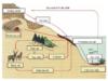 Bài 1, 2, 3, 4, 5 trang 254 SGK Sinh học 12 Nâng cao – Hãy vẽ và mô tả chu trình cacbonđiôxit.