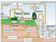 Các chu trình sinh địa hóa trong hệ sinh thái: Cacbon đi vào chu trình dưới dạng CO2…