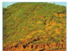 Bài 9. Hoạt động sản xuất nông nghiệp ở đới nóng – địa lí 7: Môi trường xích đạo ẩm có những thuận lợi và khó khăn gì đối với sản xuất nông nghiệp