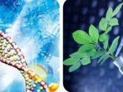 Đề kiểm tra 1 tiết môn Sinh 6: Các loại quả nào sau đây thuộc loại quả mọng?