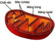 Đề kiểm tra 1 tiết Phần 2 Chương 2 – Cấu trúc của tế bào Sinh 10: Thành tế bào không được tìm thấy ở sinh vật nào dưới đây?