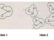 Kiểm tra 45 phút Phần 2 Chương 1 – Thành phần hóa học của tế bào Sinh 10: Có khoảng bao nhiêu nguyên tố hóa học cấu thành các cơ thể sống?