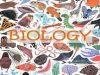 Kiểm tra 15 phút môn Sinh lớp 12 Chương V: Bệnh di truyền ở người mà có cơ chế gây bệnh do rối loạn ở mức phân tử gọi là gì?