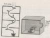 Bài tập trắc nghiệm trang 66 SBT Sinh 11: Hưng phấn là khi tế bào bị kích thích như thế nào ?