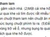 Luyện từ và câu – Đại từ trang 60, 61, 62 Vở bài tập (SBT) Tiếng Việt lớp 5 tập 1: Cần thay thế danh từ bị lặp lại (trong mẩu chuyện trên) bằng đại từ ở những câu nào? Trả lời bằng cách viết lại những câu đó