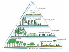 Bài 1, 2, 3,4,5,6 trang 200 SGK Sinh 12: Chu trình sinh địa hóa và sinh quyển