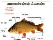 Bài 1, 2, 3, 4, 5 trang 60 SBT Sinh 7: Bằng cách nào có thể xác định được vai trò của các vây cá ?
