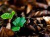 Bài 5, 6, 7, 8 trang 35 SBT Sinh 6: Vì sao sự thoát hơi nước ở lá có ý nghĩa quan trọng đối với cây ?