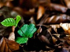Bài tập tự luận trang 47 SBT Sinh 6: Hãy tìm một số ví dụ về khả năng sinh sản sinh dưỡng tự nhiên của các loài cây.