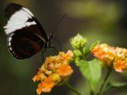 Bài 1, 2, 3, 4 trang 50 Sách BT Sinh 6: Hoa tự thụ phấn thuộc loại hoa gì?