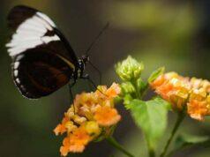 Bài 4, 5, 6 trang 73 SBT Sinh 9: Trong tự nhiên, giữa các sinh vật có ảnh hưởng lẫn nhau như thế nào?