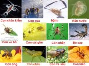 Bài 1, 2, 3, 4 trang 126 SBT Sinh 7: Hãy giải thích các đặc điểm thích nghi của động vật ở môi trường hoang mạc đới nóng
